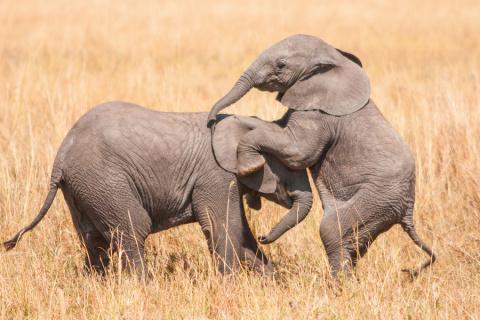 Очаровательные фотографии слонят