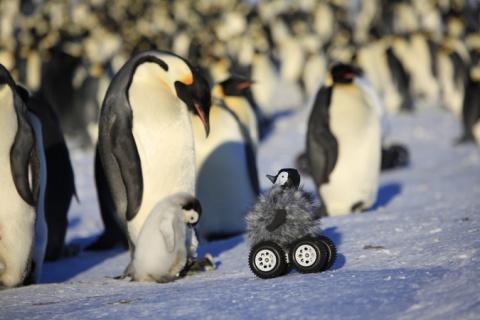 Шпионский пингвиненок