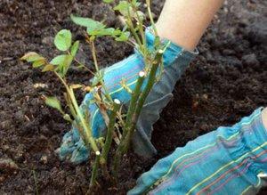 Посадка деревьев весной: рекомендации и советы