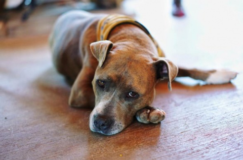 Собака, которая жила в подва…