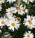 Природная аптека: лекарство на грядках