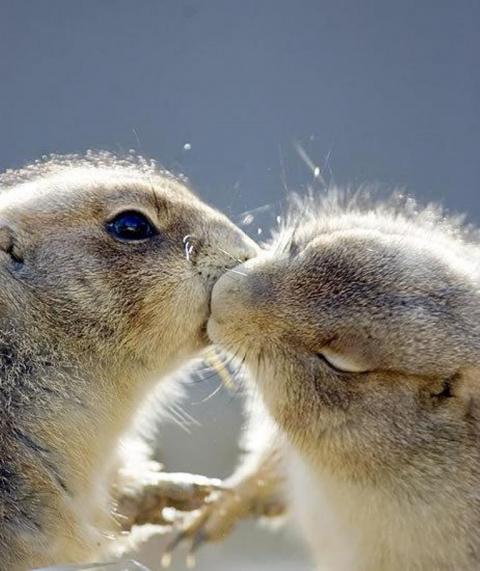 35 фактов о поцелуях