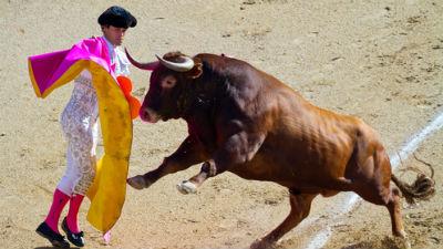 Впервые с 1979 года в Испании отменена коррида