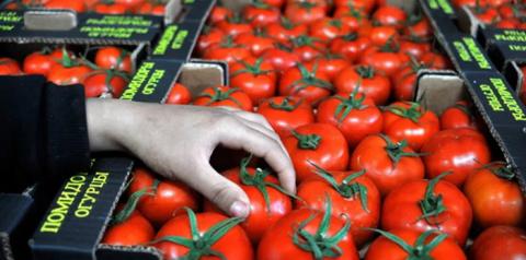 Турецкие помидоры вновь прид…