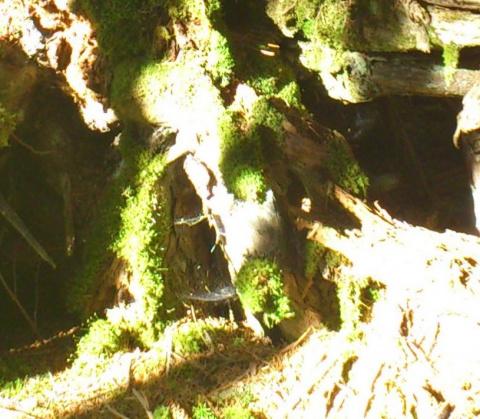 Тонкий мир. лесные жители. А... давайте дружить?