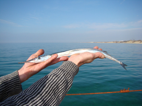 1450. В Севастополе прошел рыболовный турнир по лову саргана