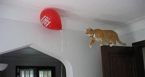 примеры феноменальной кошачьей логики