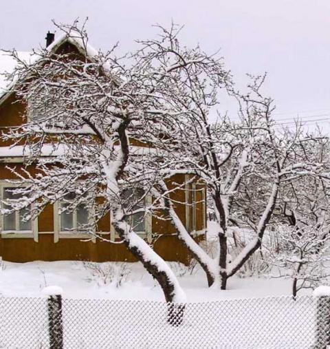 Зимняя поездка в сад