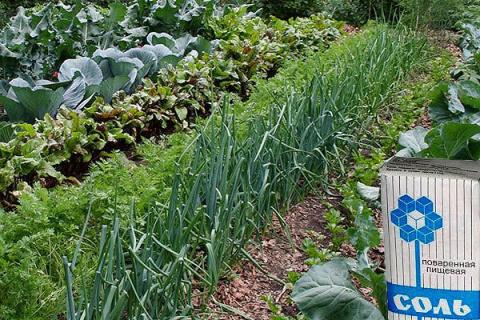 Применение поваренной соли в огороде — непревзойденный результат!