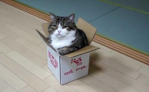 Это неподражаемо! Кот пытается втиснуть попу в коробочку