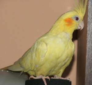 Весёлоё видео про попугайчиков