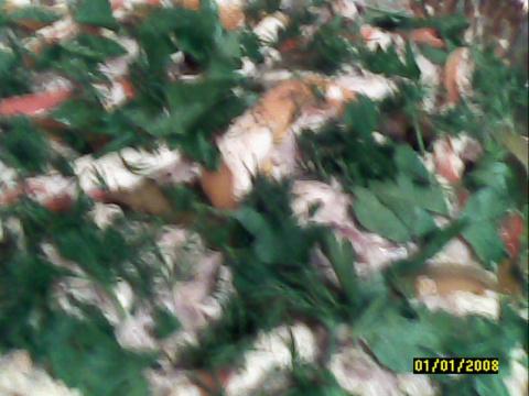 Куриные бёдрышки со сладким перцем