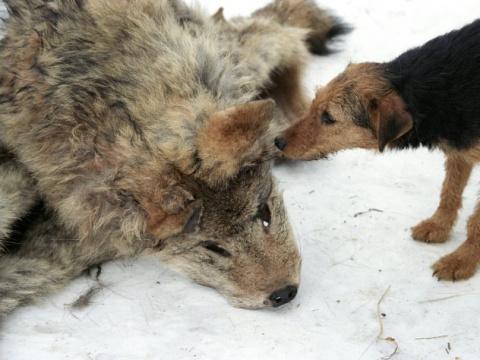 Чету Плющенко назвали «зверьми» за их вкусы