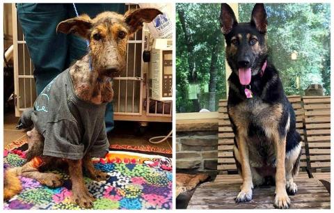 Удивительное спасение собаки…