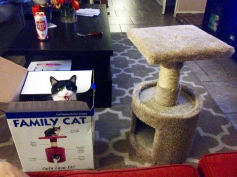 Коты лучше хозяев знают, как…