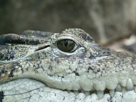 Николай Травкин. Крокодилова любовь