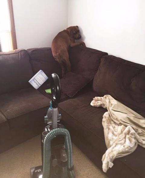 Завел собаку, наконец-то чув…