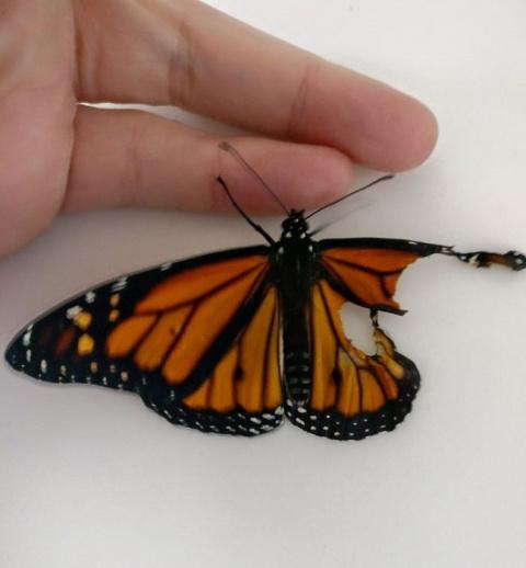 Девушка заменила бабочке сло…