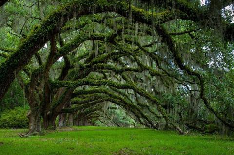Удивительная красота деревье…