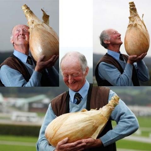 Луковая шелуха для эко урожая