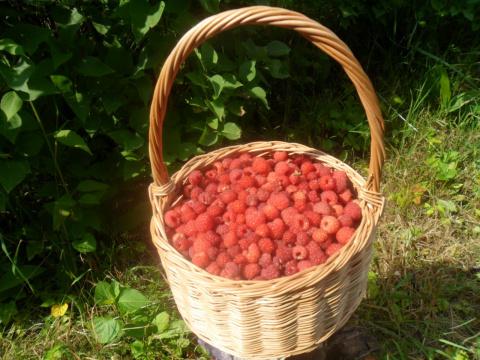 Корзинка из лозы для ягодок!