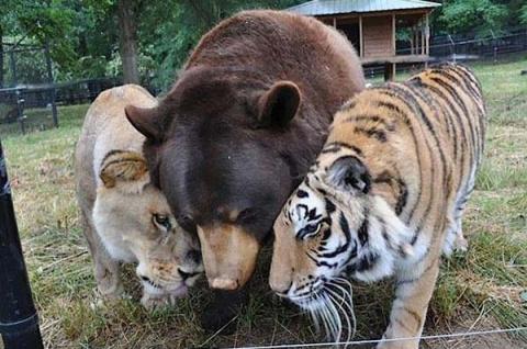 Трогательные истории дружбы между такими разными животными