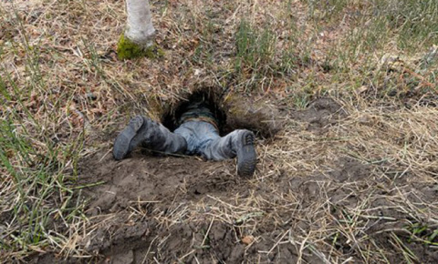 Вот как выглядит берлога медведя