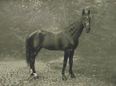 Самые умные лошади