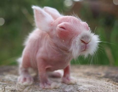 Животные без шерсти - едва можно узнать