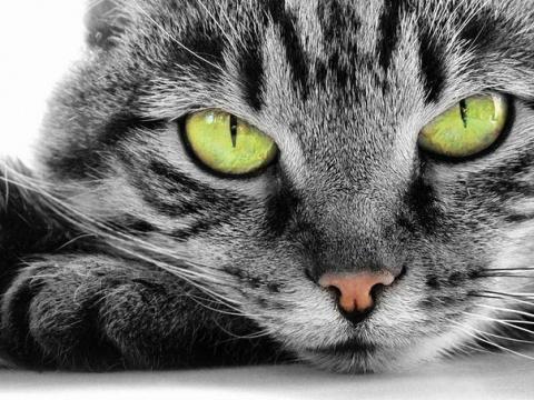 Коты, которые ведут себя как люди)