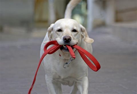 Здорова ли Ваша собака?