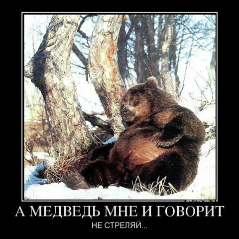 мой знакомый медведь картинки