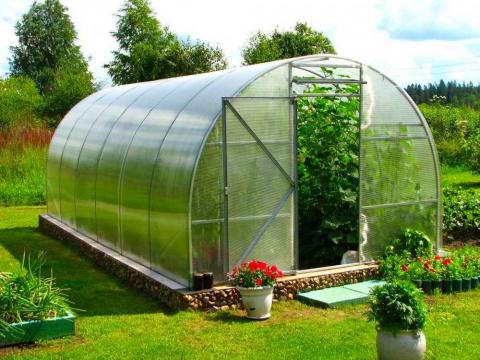 Советы по выращиванию овощей в теплице. Как ухаживать за молодым виноградом
