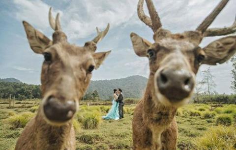 Прикольные свадебные фотогра…