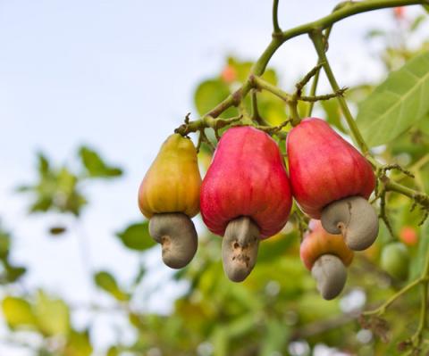 11 продуктов питания, которые растут необычным образом