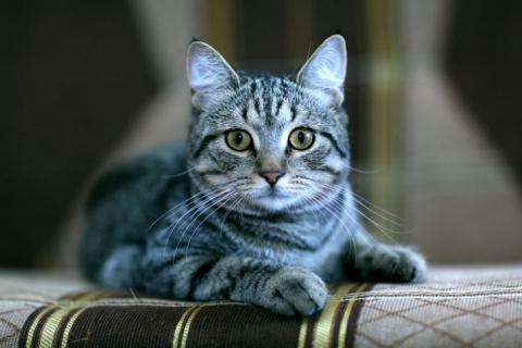 В прошлой жизни мой кот был …