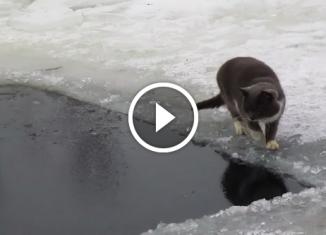 Кот рыбалов