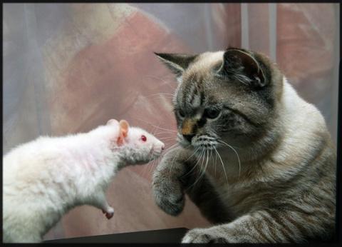 Человек и кошка: кошек впервые приручили в Китае, а не в Египте?