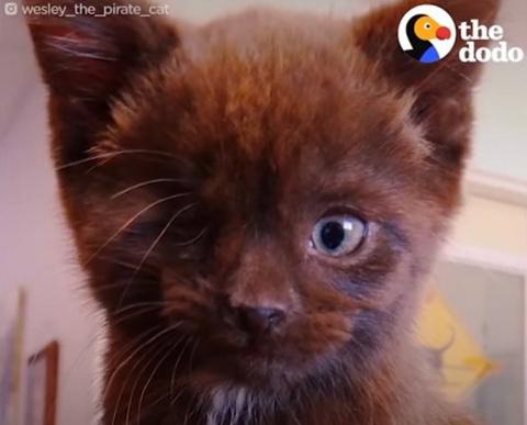 Кто сказал, что черные коты …