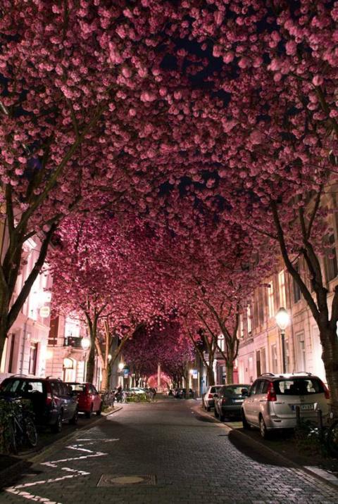 10 самых красивых туннелей из деревьев