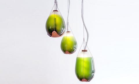 Потрясающие живые фотосинтетические светильники