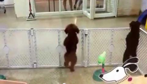 Настоящая щенячья радость! (видео)