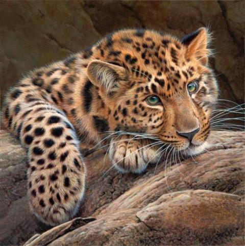 27 реалистичных картин животных от английского художника-иллюстратора Эндрю Хатчинсона