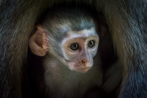 Национальный парк Крюгер - самый населённый заповедник Африки