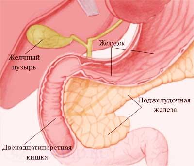«Оздоровление организма по системе сщмч. Серафима (Чичагова)»