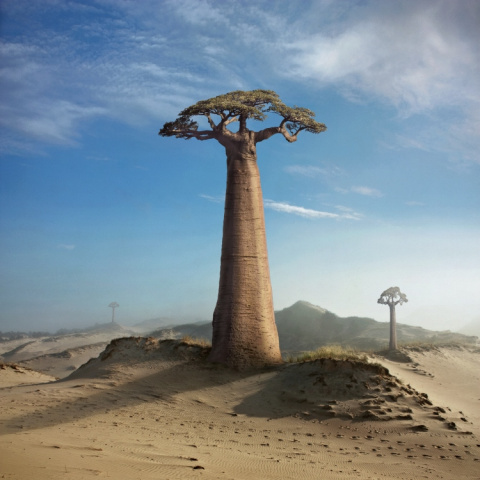 Land of the baobabs
