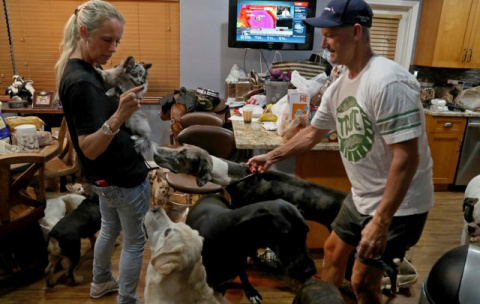 Пара взяла 46 животных в сво…