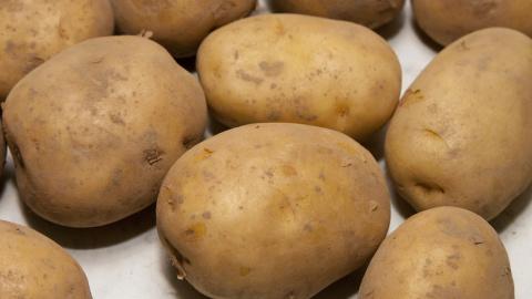 Жителей России ждет картофельный голод
