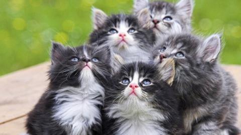 Владелец 10 котят пытался их…