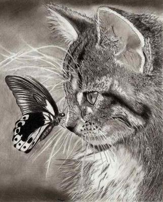 Кот монохром